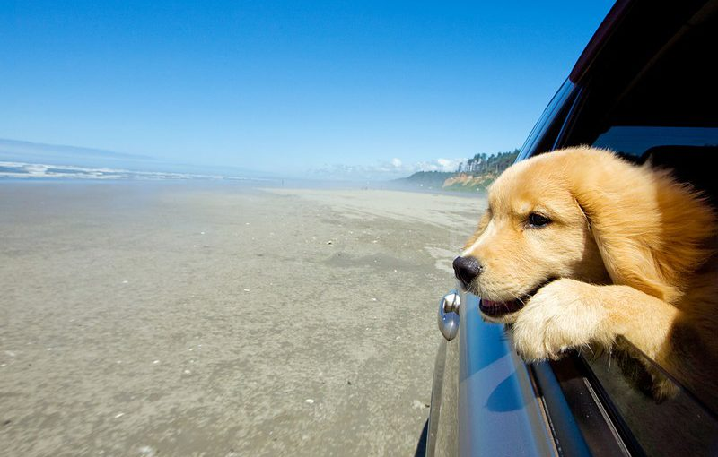 Bring or Relocate Your Pet to Turkey